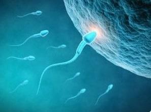 Reflexology and fertility