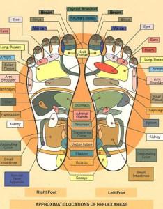 Australian foot chart also modern institute of reflexology rh reflexologyinstitute