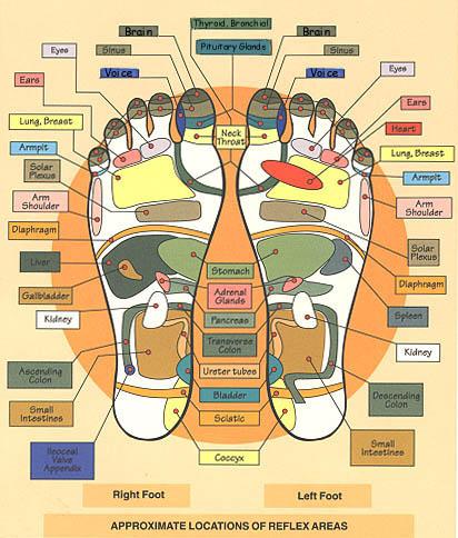 foot massage therapy diagram 2 5 mm jack wiring modern institute of reflexology