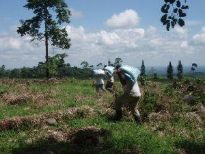 Fertilizer for the seedling trees...