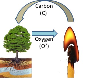 RTT Trees Remove carbon dioxide from the Atmosphere.