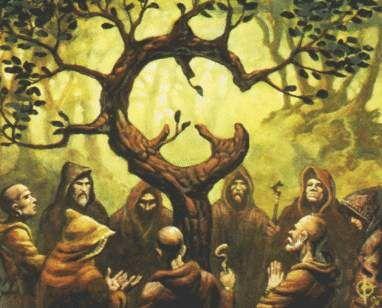 Image - druid grove