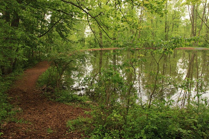 Pond_Outdoors_Summer_Nature Path