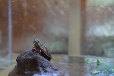 Turtle_Nature Center