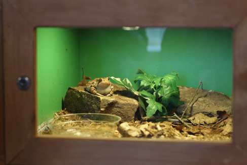 Nature Reptile Display