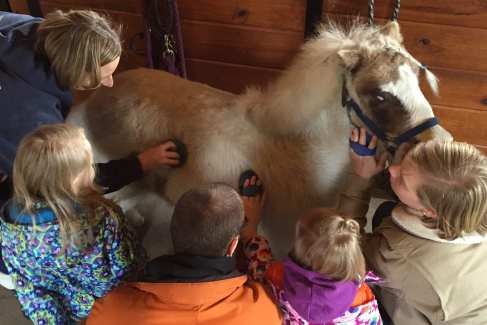 Pony Care Family