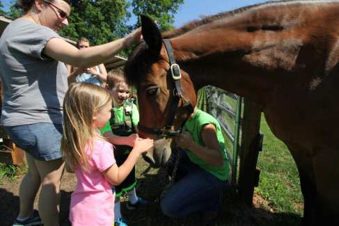 Farm Animal Experience_Horse_Children_Summer