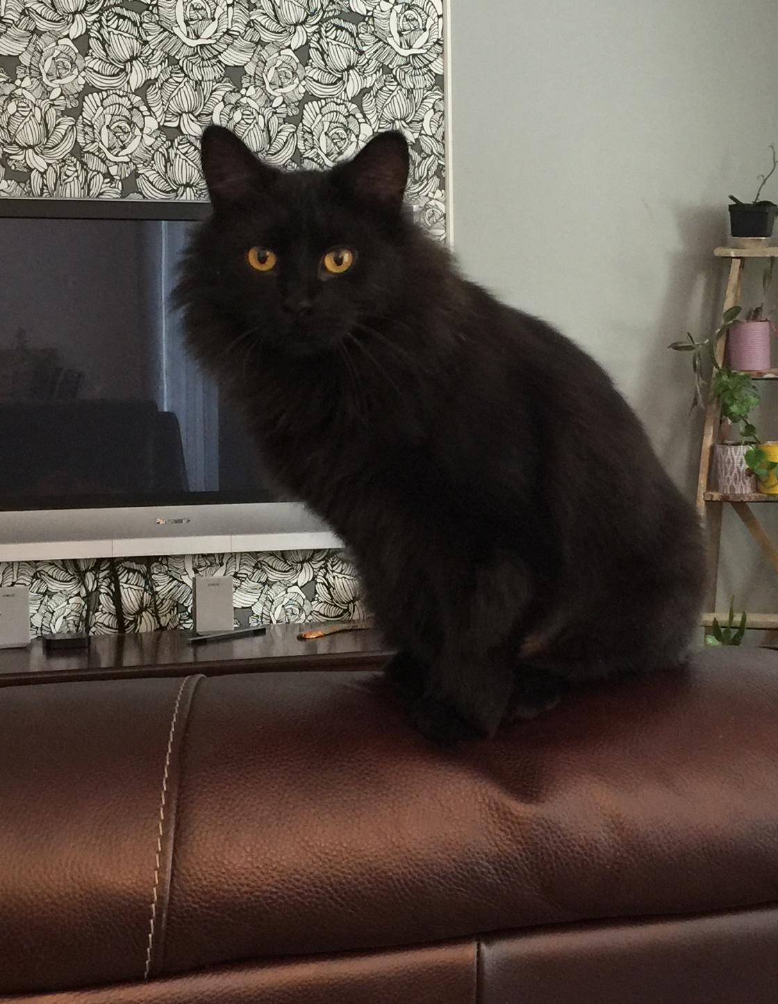 Belle chatte noire Г la recherche