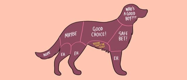 acariciar perro