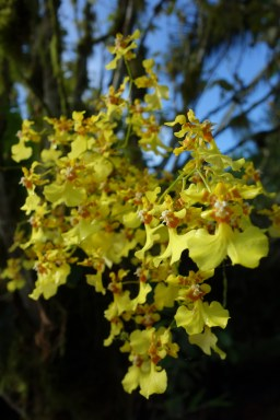 This region of Ecuador is known for its orchid diversity