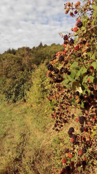 Regain Mure Ardeche - Plantes sauvages10