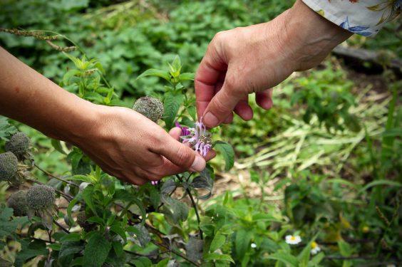 Regain Mure Ardeche - Plantes sauvages2