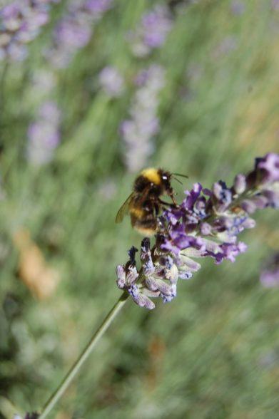 Regain Mure Ardeche - Plantes sauvages3
