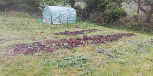 Regain-de-la-Mure-plants3