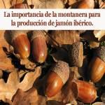 La importancia de la montanera para la producción de Jamón Ibérico