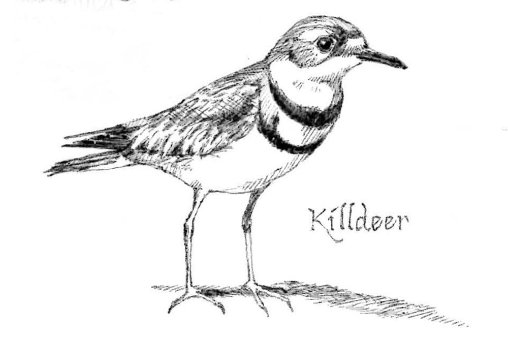 Establishing Post: Old drawings in ballpoint pen