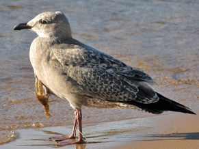 all-the-young-gulls-in-paris-are-wearing-crayfish-this-fall