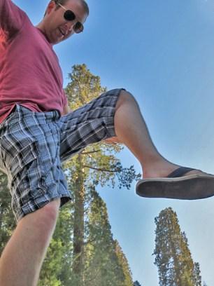 Save the Giant Sequoias