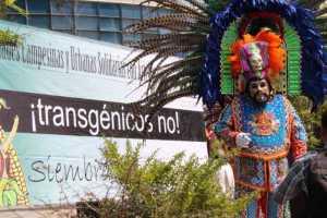 transgenicos-NO