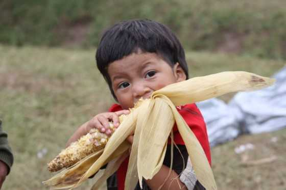 ninio-maiz
