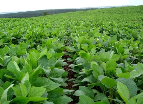 Anulan_permiso_a_la_empresa_Monsanto_para_sembrar_soya_transgenica_en_Yucatan