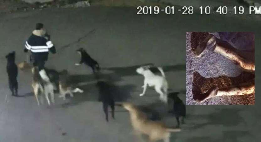 perros callejeros edomex - Llevan a perros ligados a muerte de mujer a albergue animal de Tecámac