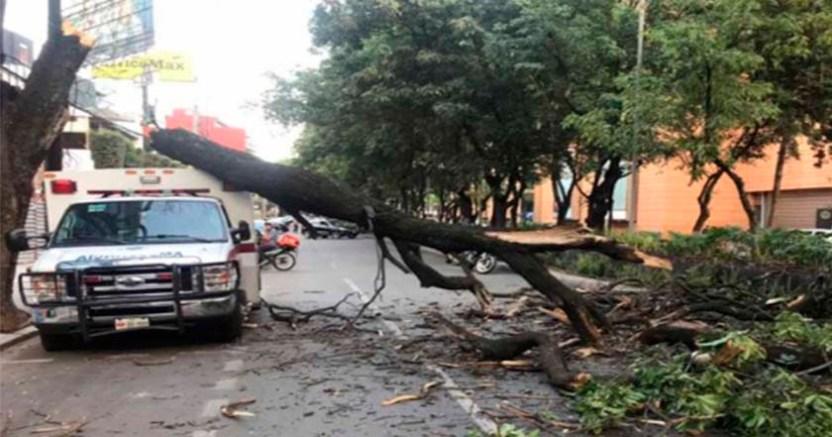 rbol cae sobre ambulancia en la colonia Polanco - Árbol cae sobre ambulancia en la colonia Polanco, CDMX