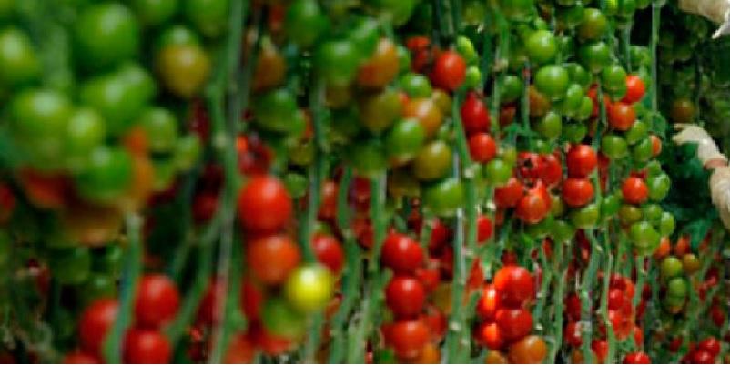 agroalimentos - México presenta balance comercial favorable en agroalimentos