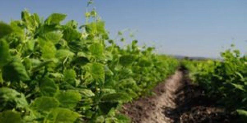 0630 SADER2 300x150 - Tiene máxima transparencia programa de fertilizantes en Guerrero: Sader