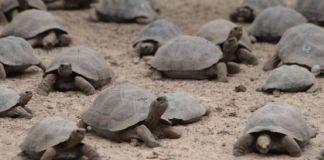 Cambio climático podría afectar reproducción de tortugas