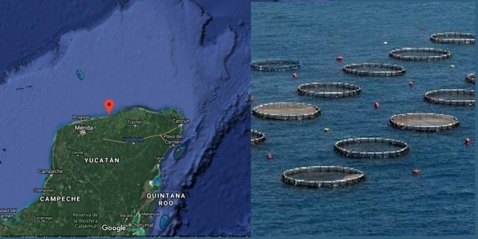 Mexico and China agree to boost mariculture