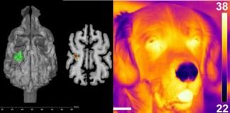 Perros son capaces de detectar calor con la nariz