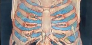 Vídeo en 3D muestra los efectos del Covid-19 en los pulmones