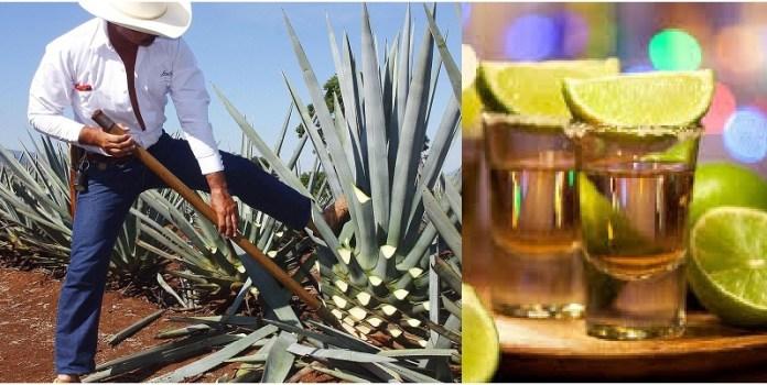 Tequila, dia nacional