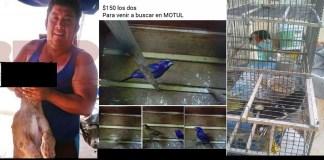 Yucatán, denuncian venta de vida silvestre