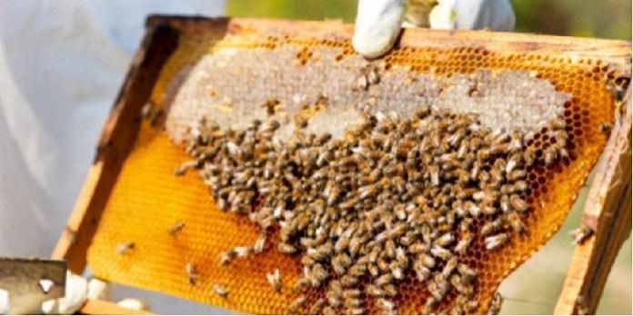 Norma Oficial para garantizar pureza en miel