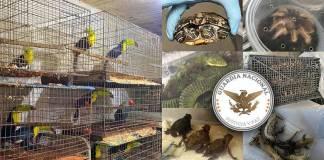 De Iztapalapa a Zoológico de Culiacán; animales decomisados llegan a su nuevo hogar