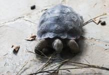 Profepa protege casi 2.5 millones de nidos de tortuga marina