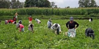 Mexicanos iban por trabajo a Polonia y terminan en red de trata laboral