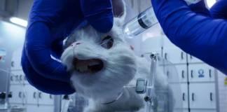 """""""Save Ralph"""" busca concientizar en contra de la experimentación en animales"""
