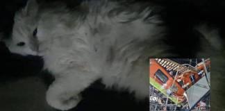 Gato sobrevive al derrumbe de la Linea 12 del Metro; viajaba en su caja transportadora