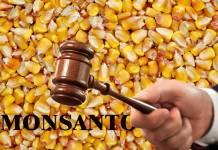 Revés de un juez a Monsanto por uso de herbicida peligroso