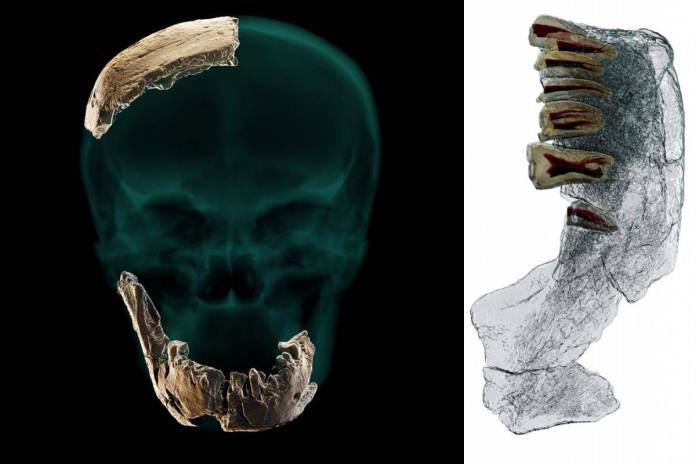 Científicos descubren al Homo Nesher Ramla, una nueva especie humana