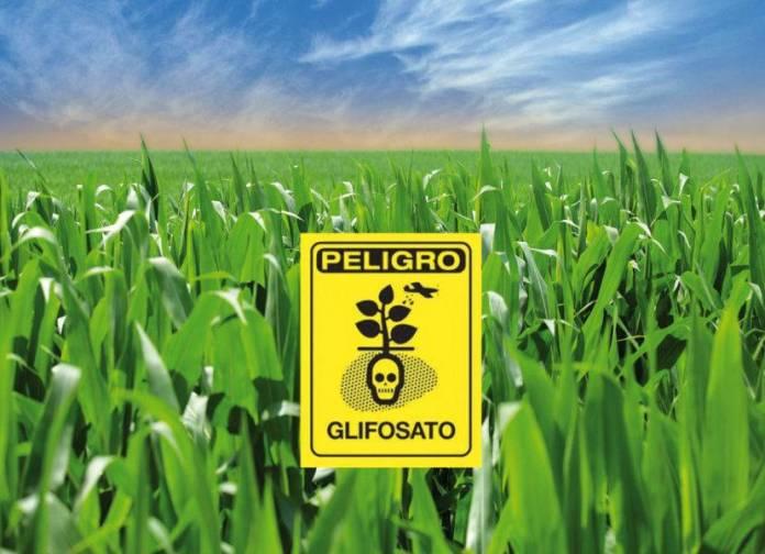 Semarnat autorizó importación de más de 300 millones de kilos de glifosato