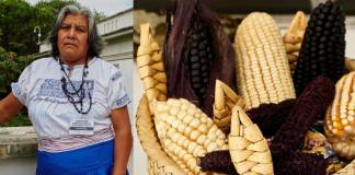 Cocinera otomí gana concurso gastronómico con atole morado