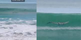 Familia confunde un cocodrilo con un tronco; video se viraliza