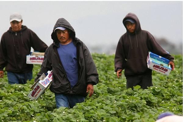 EE.UU. suspende redadas masivas de trabajadores indocumentados