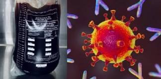 Suero equino para neutralizar reproducción de virus del Covid