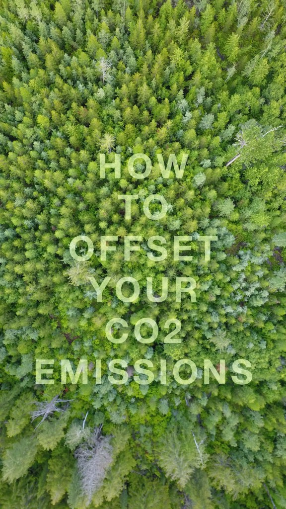 "Article Title ""How to Offset Your Carbon Credits"" set over trees."