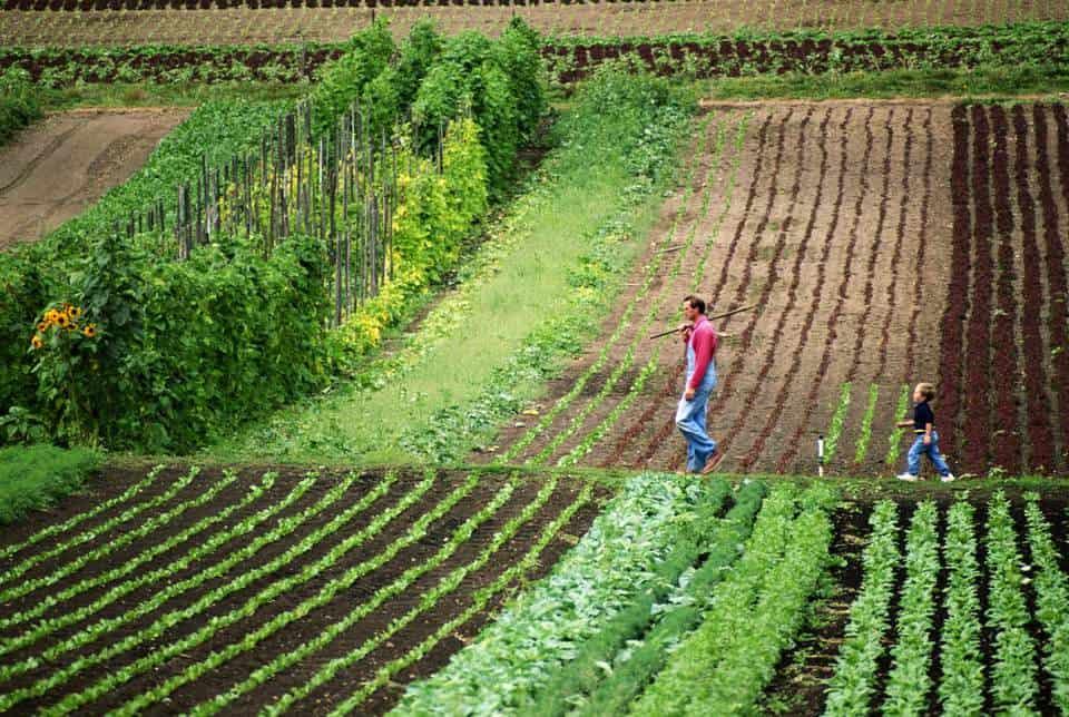 The Future of Regenerative Agriculture, expert panel 1